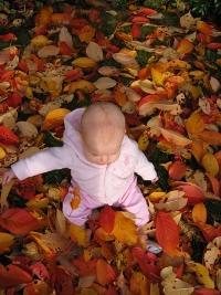 fall-pic.jpg